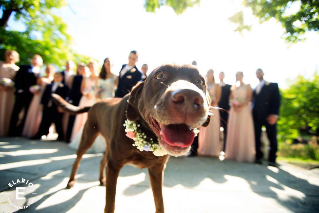 90_state_st_albany_wedding_photos-101